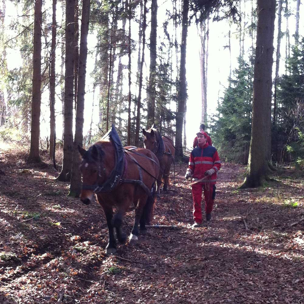 Familie-Ritter-Biolandhof_Pferde-Holzruecken_1000x1000px