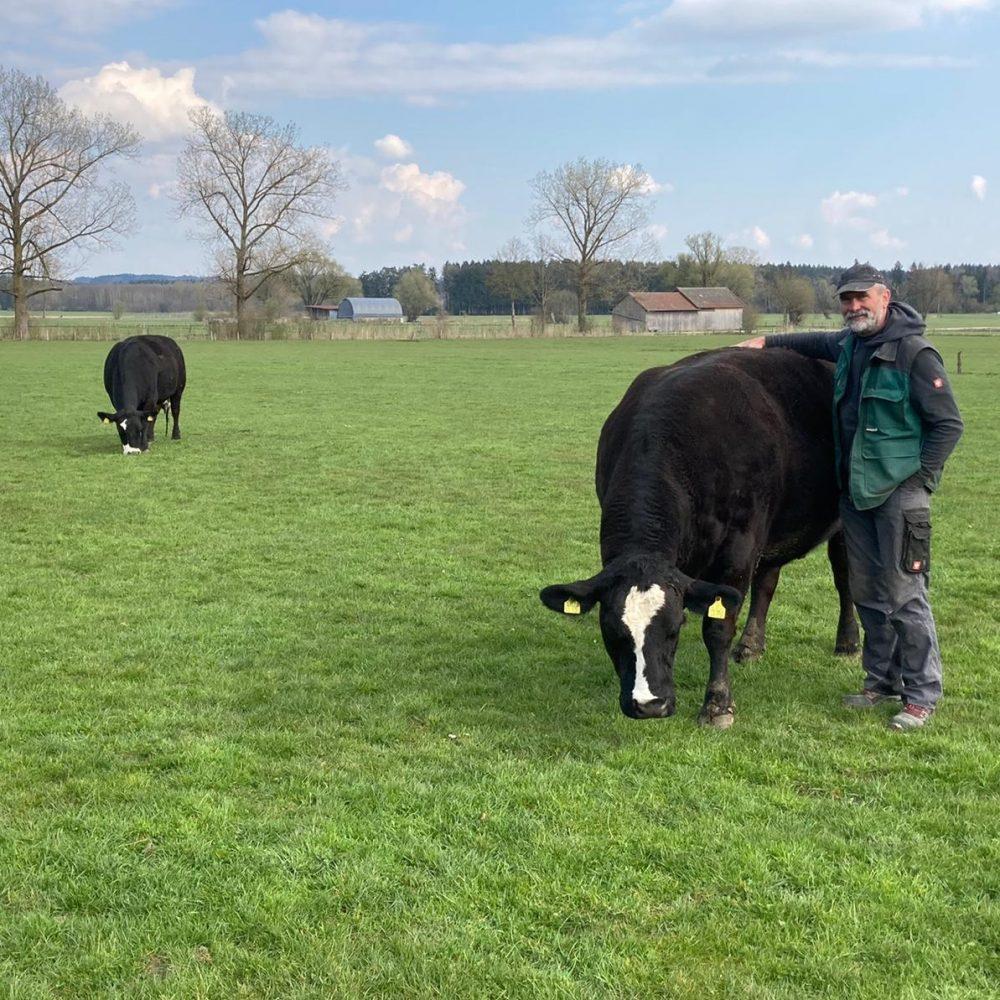 Papa und zwei Kühe